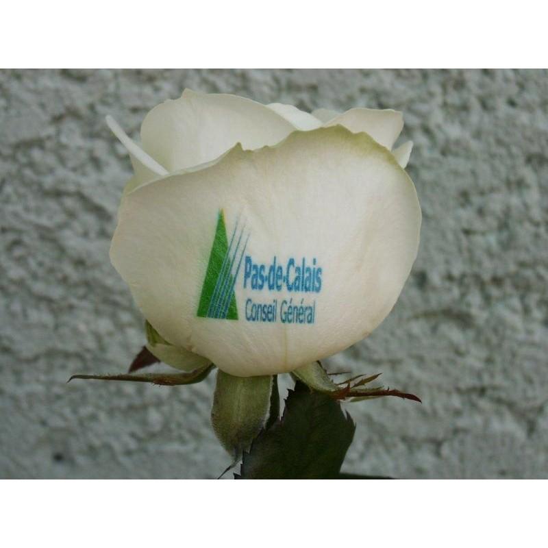 Roses personnalisables - Jardinage publicitaire