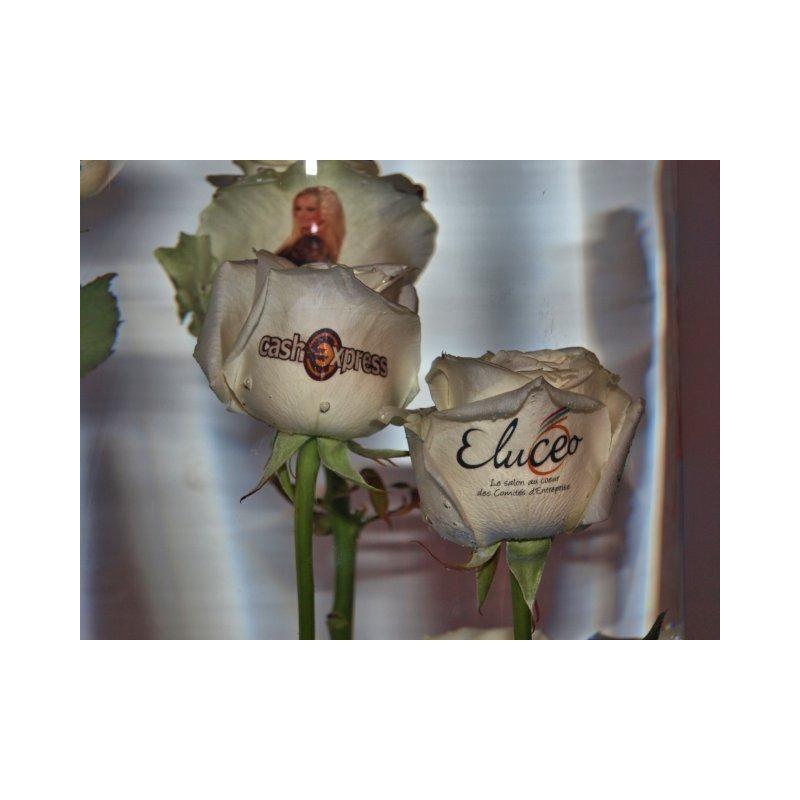 Roses personnalisables - Jardinage sur mesure
