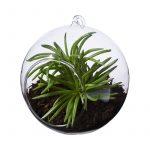 terrarium-sphere